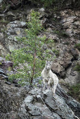 Photograph - Viewing The Spectator by Belinda Greb