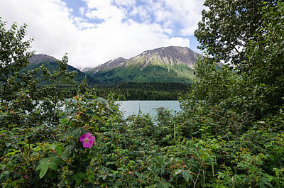 Photograph - Views In Alaska by Margaret Pitcher