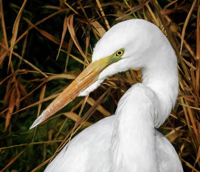 Photograph - Vigilant Egret by Wes and Dotty Weber