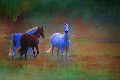Photograph - Vigilant Mare by Alice Gipson