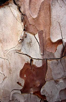 Photograph - Vigilant - Tree Bark Pareidolia by Elena Schaelike