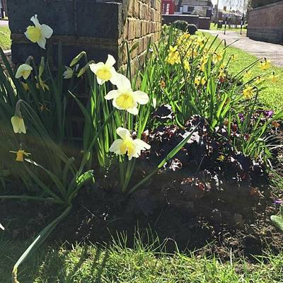 Warwickshire Photograph - Village Flower Beds #milleniumwheel by Emma Gillett
