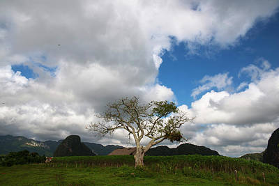 Photograph - Vinales Valley I by Yuri Santin