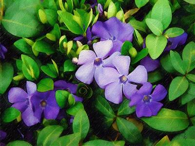 Vinca Art Print by Sandy MacGowan