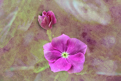 Photograph - Vinca Sheen by Kay Brewer