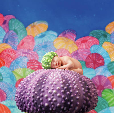 Vince As A Sea Urchin Art Print by Anne Geddes