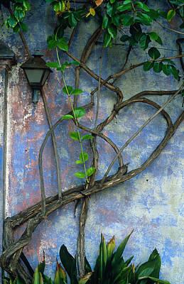 Kathy Yates Photograph - Vine And Wall by Kathy Yates