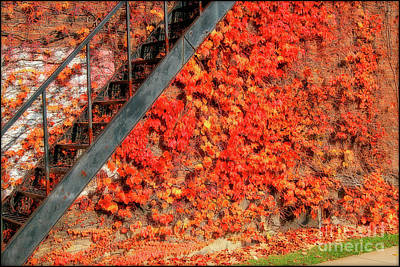 Digital Art - Vine Covered Wall In The Fall by Randy Steele