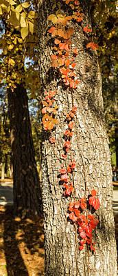 Photograph - Vine Down The Tree by Bonnie Davidson