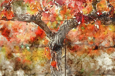 Photograph - Vine In Autumn by Brandon Bourdages