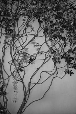 Photograph - Vine by Jacqui Boonstra