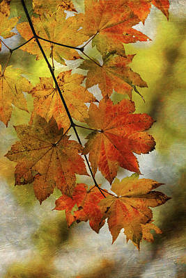 Photograph - Vine Maple Leaves by Angie Vogel
