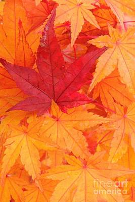 Photograph - Vine Maple Mosaic by Frank Townsley