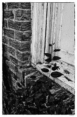 Photograph - Vine, Monochrome by Travis Burgess