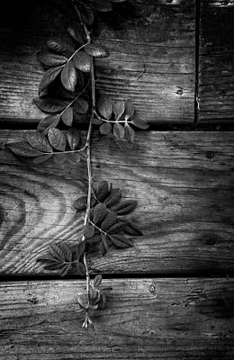 Photograph - Vine On Barn by Greg Mimbs