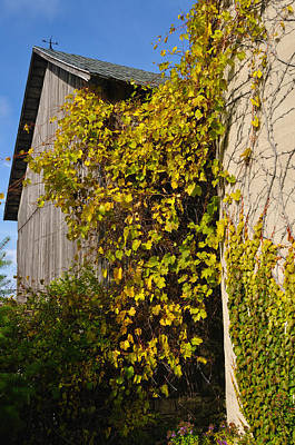 Photograph - Vined Silo by Tim Nyberg