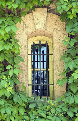 Vined Window I Art Print
