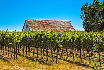 Photograph - Vines And Barn by Kim Wilson