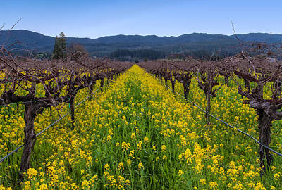 Photograph - Vines And Mustard Flowers by Jonathan Nguyen