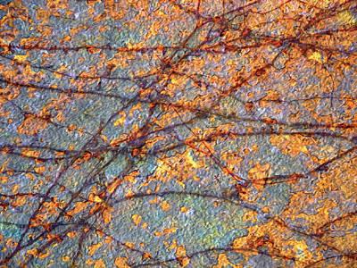 Photograph - Vines And Rust 1 by Lynda Lehmann