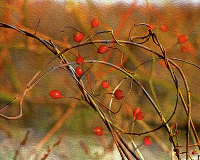 Digital Art - Vines And Winterberries by Lynda Lehmann