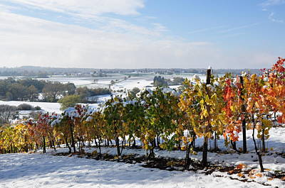 Photograph - Vines In Autumn Leaves And Snow Covered Landscape by Martin Stankewitz