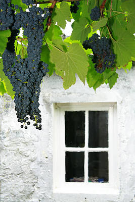 Vines In The Backyard Art Print