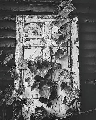 Photograph - Vines On A Door by Marvin Borst