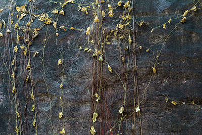 Art Print featuring the photograph Vines On Rock, Bhimbetka, 2016 by Hitendra SINKAR