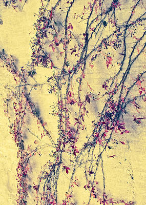 Photograph - Vines On Yellow Wall Abstract by Tony Grider