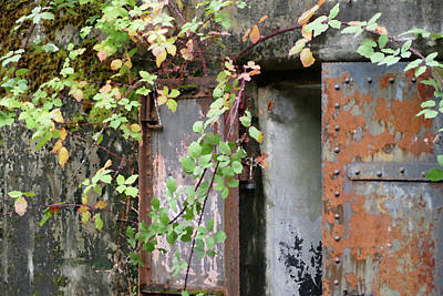 Photograph - Vines Over Rust by Laurel Powell