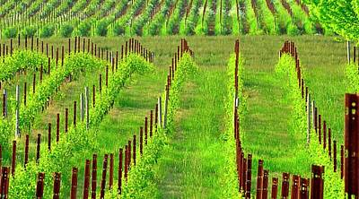 Photograph - Vineyard 24068 36x20 by Jerry Sodorff