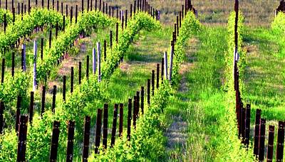 Photograph - Vineyard 24070 14x8 by Jerry Sodorff