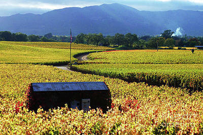 Photograph - Vineyard 25 by Xueling Zou