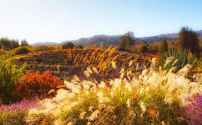 Photograph - Vineyard Afternoon By Mike-hope by Michael Hope