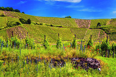Photograph - Vineyard Alsace France_dsc7958_16  by Greg Kluempers