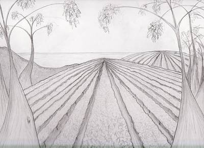 Drawing - Vineyard And Karri By The Ocean by Leonie Higgins Noone