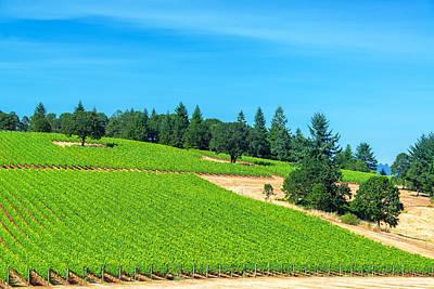 Pinot Noir Photograph - Vineyard And Pine Trees by Jess Kraft