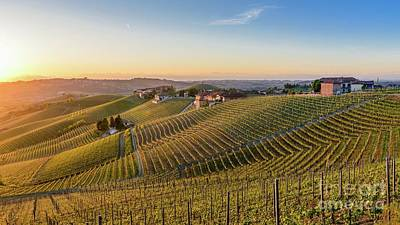 Photograph - Vineyard At Barbaresco, Italy by Alexandre Rotenberg