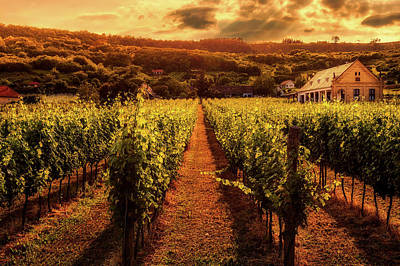 Photograph - Vineyard Beauty by Pixabay