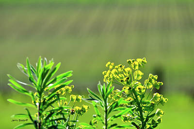 Photograph - Vineyard Blossoms 23076 Cr by Jerry Sodorff