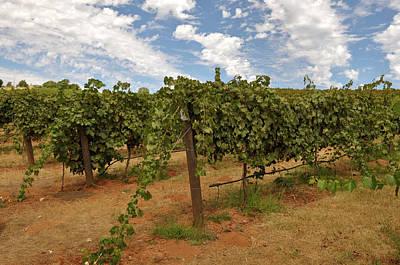 Napa Valley Photograph - Vineyard Blue Sky by Brandon Bourdages