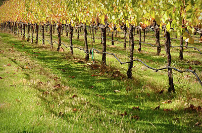 Grapes Photograph - Vineyard by Brandon Bourdages