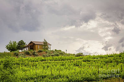 Photograph - Vineyard Cabin by Jean OKeeffe Macro Abundance Art