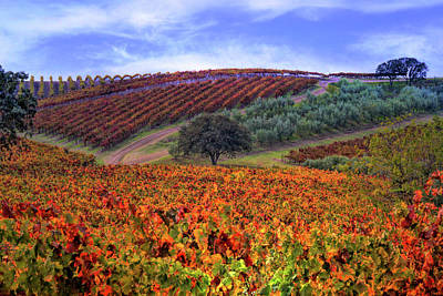 Wine Vineyard Photograph - Vineyard Color by Stephanie Laird