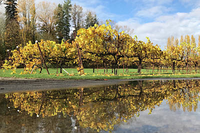 Photograph - Vineyard Foliage by John Clark