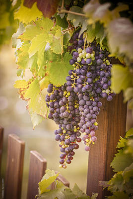 Photograph - Vineyard Gate by Debbie Karnes