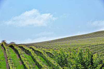 Photograph - Vineyard Hillside by Kim Wilson