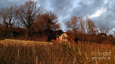 Photograph - Vineyard House  by Susanne Van Hulst