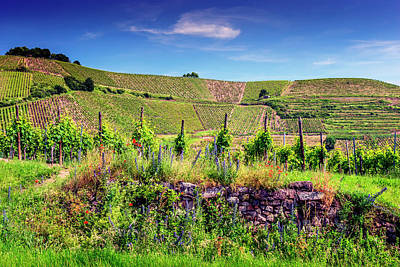 Photograph - Vineyard In Alsace France_dsc7962_16 by Greg Kluempers